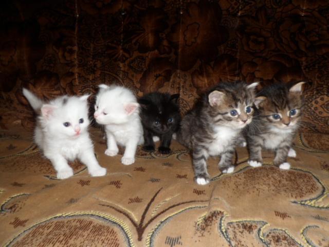 Продаю: Четыре сыночка и лапочка дочка