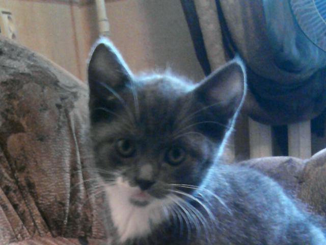 Отдам в дар: Очаровательные котята ищут себе уютный дом