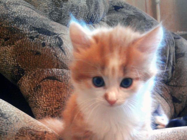 Отдам в дар: Очаровательные котята ищут себе уютный дом фото2