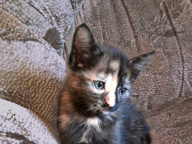 Отдам в дар: Очаровательные котята ищут себе уютный дом фото3