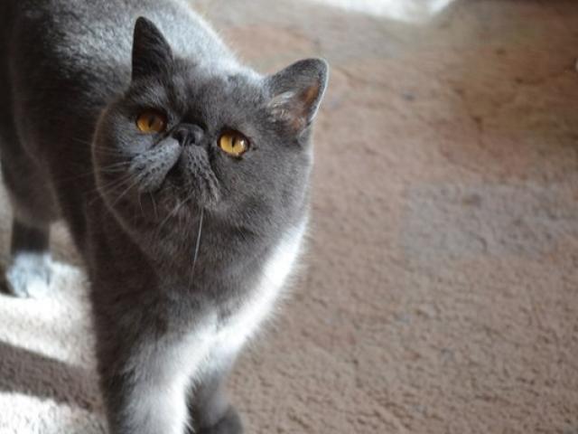 Потерялся/Нашелся: Потерялся кот