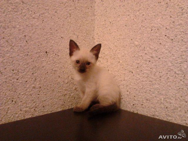 Продаю: Милые котятки