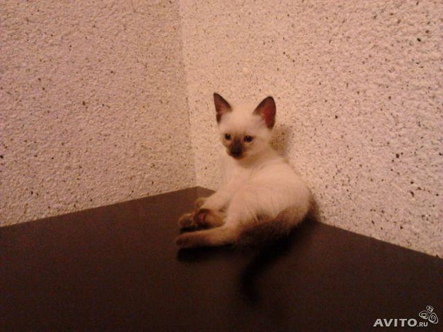Продаю: Милые котятки фото2