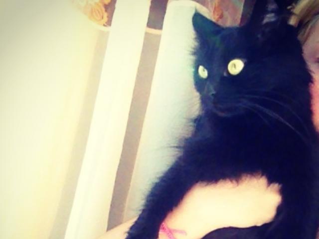 Отдам в дар: Отдам в добрые руки черную кошечку