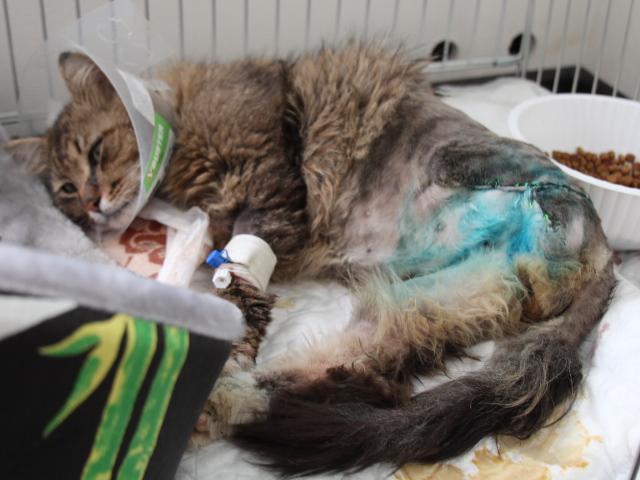 Отдам в дар: Нужен дом для котика-инвалида