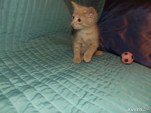 Отдам в дар: Рыжий котенок в добрый руки