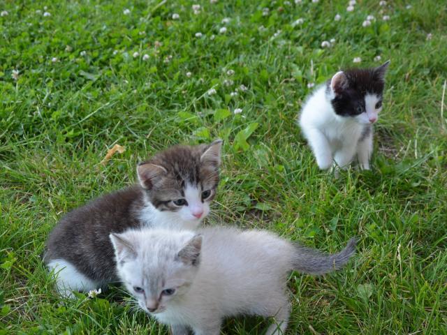 Отдам в дар: Котята ДАРОМ в НАДЕЖНЫЕ РУКИ фото2