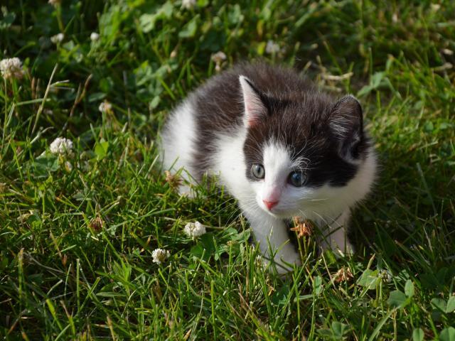 Отдам в дар: Котята ДАРОМ в НАДЕЖНЫЕ РУКИ фото3