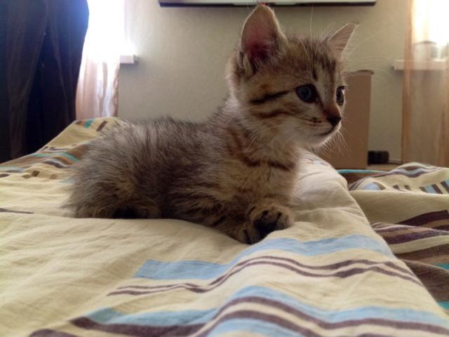 Отдам в дар: Котенок по имени Мо