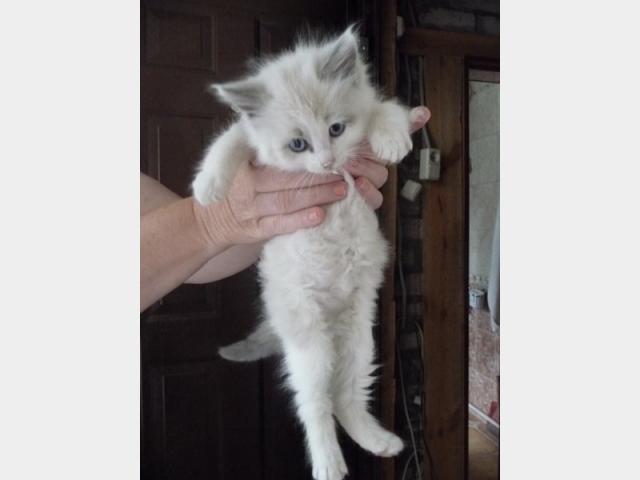 Отдам в дар: Отдам даром котенка в хорошие руки