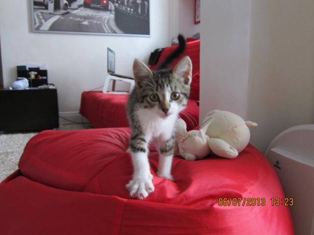 Отдам в дар: Отдам в добрые руки котю фото2