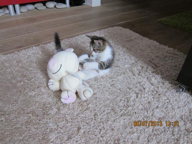 Отдам в дар: Отдам в добрые руки котю фото3