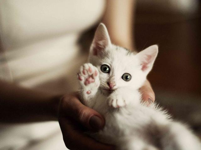 Отдам в дар: Отдам котят в хорошие руки