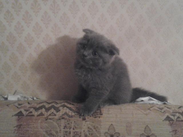Продаю: Самые красивые котята