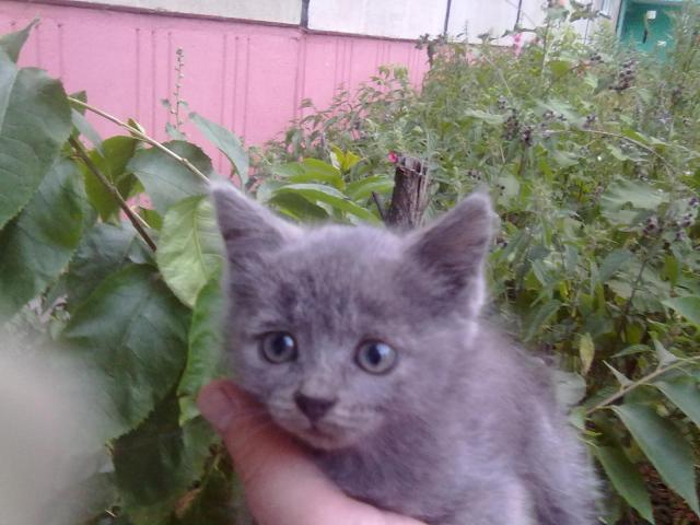 Отдам в дар: Два бездомных котенка 1,5 мес ищут хозяев