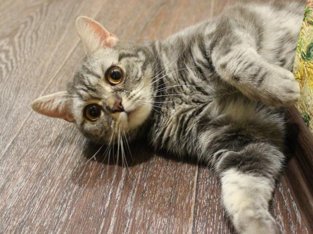 Вязка: Кошечка ищет котика для вязки