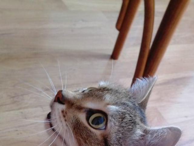 Потерялся/Нашелся: Пропал любимый кот семьи Очень дорог фото2