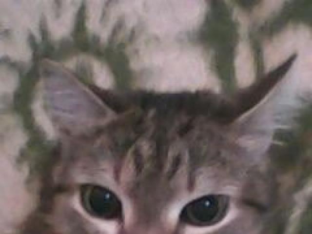 Потерялся/Нашелся: Пропал любимый кот семьи Очень дорог фото3