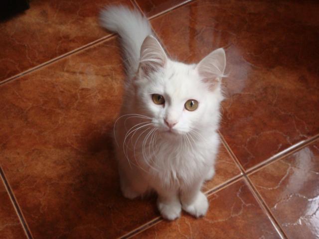 Отдам в дар: Отдам котенка в добрые руки