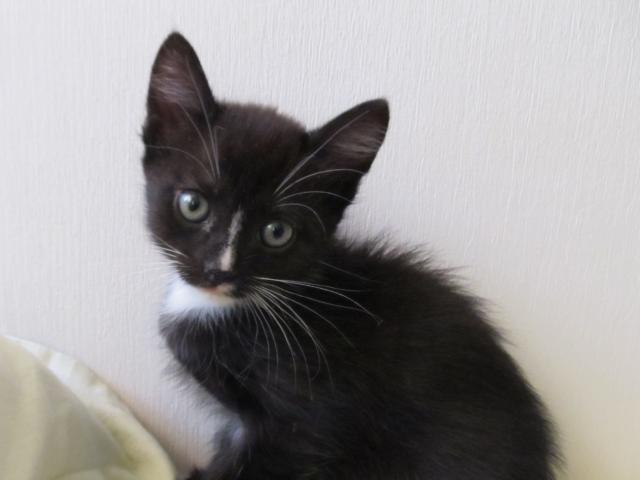 Отдам в дар: Котята-девочки в надежные руки фото3