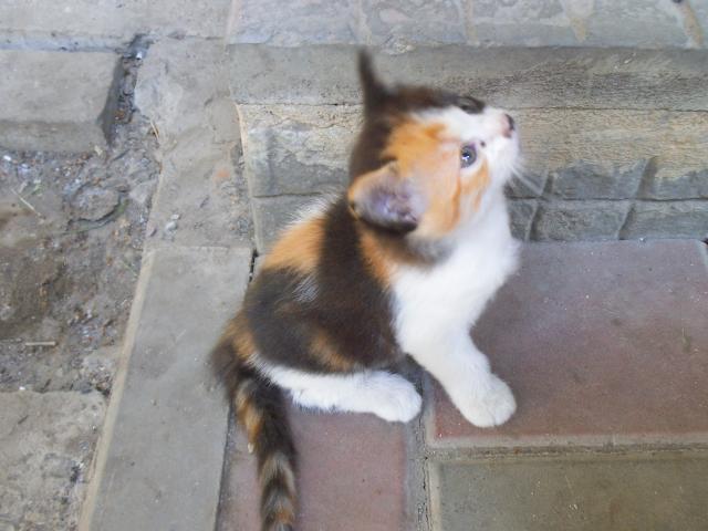 Отдам в дар: Котята ищут хозяина или хозяйку фото3