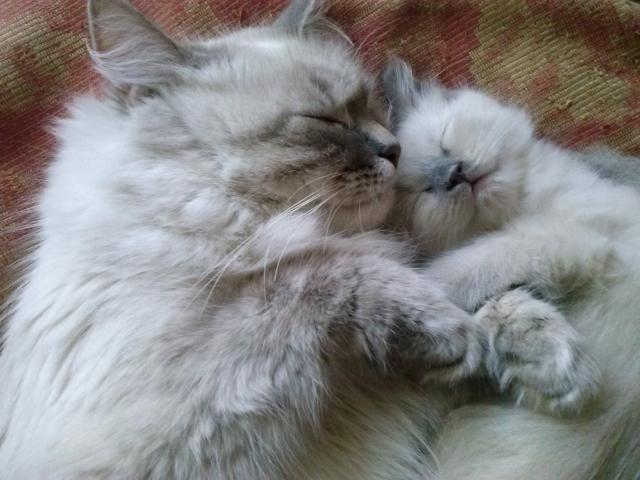 Продаю: Котёнок фото2