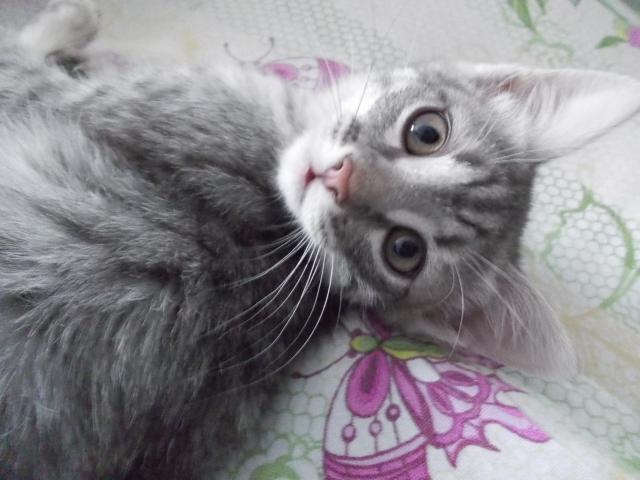 Отдам в дар: Маленький котик Кузя ищет новых хозяев фото3
