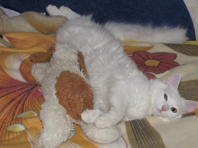 Потерялся/Нашелся: Пропала кошка