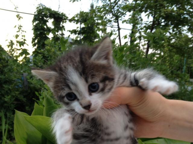 Отдам в дар: Отдам котят в дар