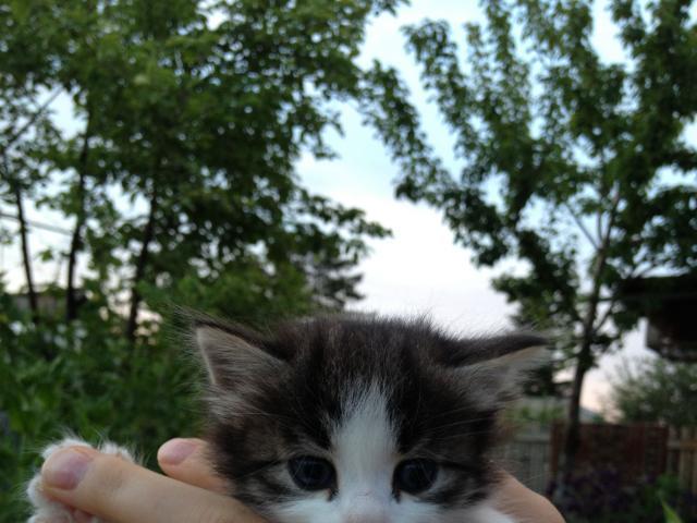 Отдам в дар: Отдам котят в дар фото3