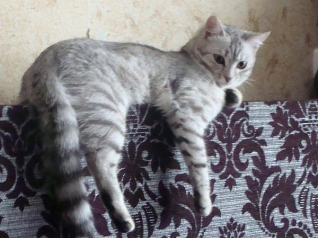 Потерялся/Нашелся: Потерялась наша любимая кошечка