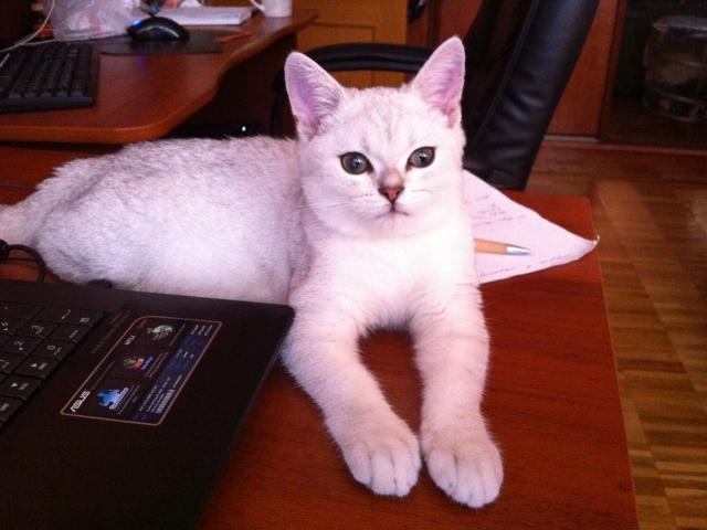 Отдам в дар: Отдам кота в хорошие руки