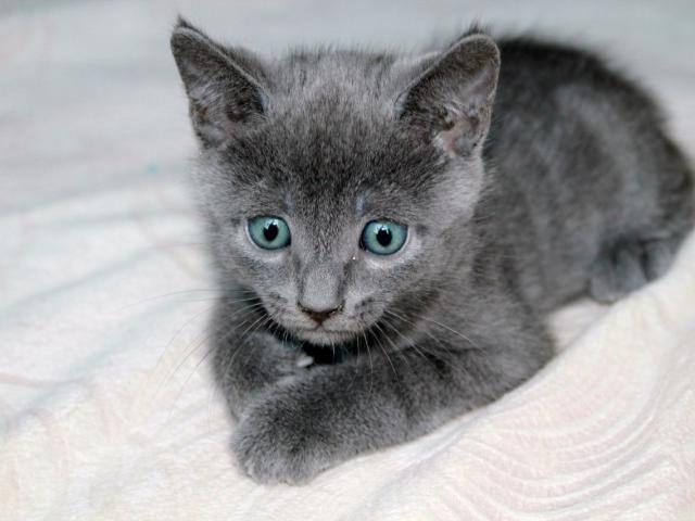 Продаю: Выставлены к продаже замечательные котята