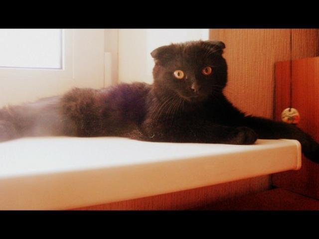 Вязка: кот ищет кошку