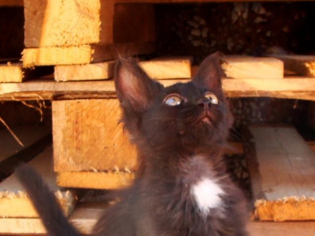 Отдам в дар: Отдам черного котеночка хорошим людям