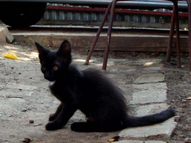 Отдам в дар: Отдам черного котеночка хорошим людям фото2