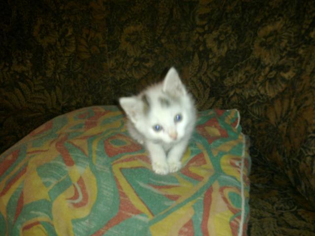 Отдам в дар: Подарю котят