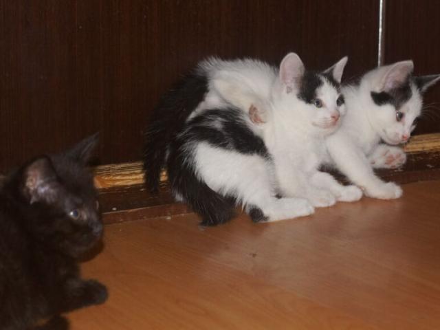 Отдам в дар: 4 очаровательных котенка в возрасте 15 мес