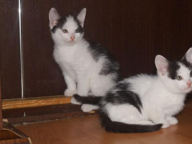 Отдам в дар: 4 очаровательных котенка в возрасте 15 мес  фото2