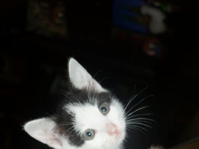 Отдам в дар: 4 очаровательных котенка в возрасте 15 мес  фото3