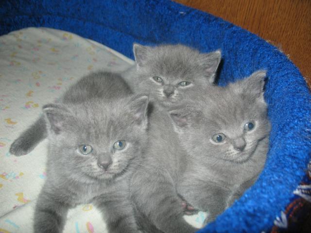 Продаю:  котят фото2