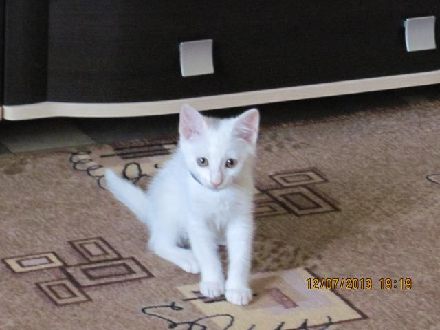 Отдам в дар: Отдам котёнка в добрые руки даром фото2