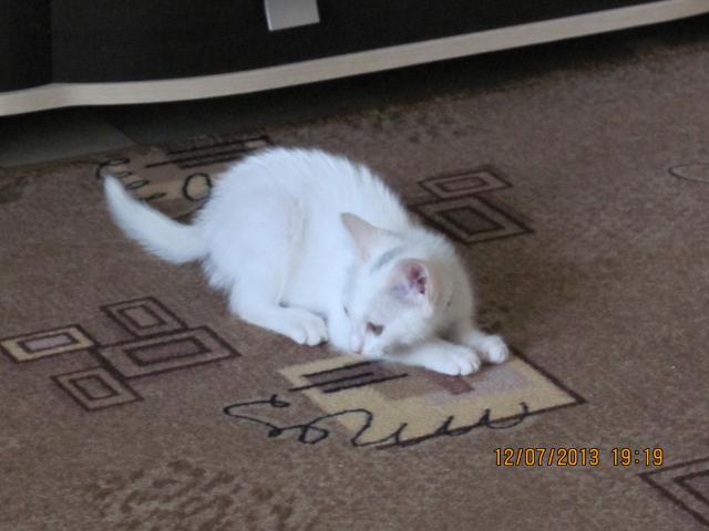 Отдам в дар: Отдам котёнка в добрые руки даром фото3