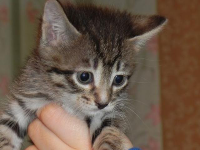 Отдам в дар: Кошечка Розмари ищет любящую семью
