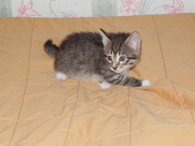 Отдам в дар: Кошечка Розмари ищет любящую семью фото2