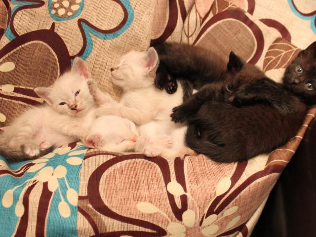 Продаю: Котейки ищут дом