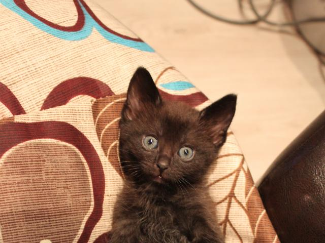 Продаю: Котейки ищут дом фото2