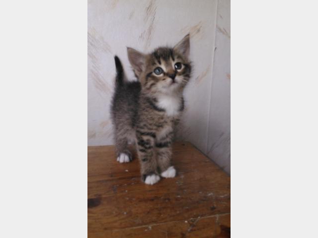 Отдам в дар: Лесные котята в дар фото3