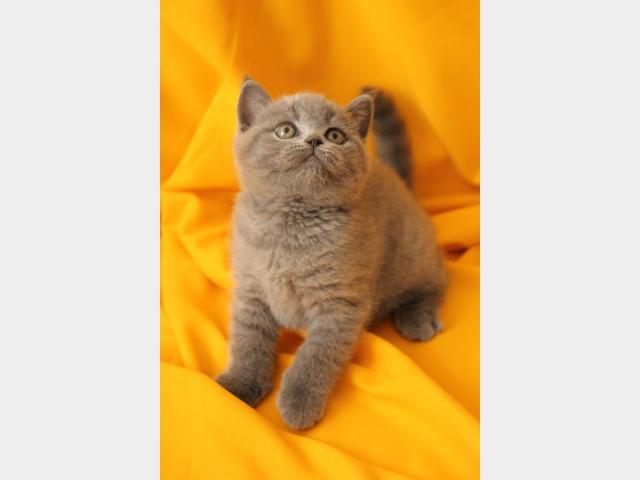 Продаю:  котенка фото2