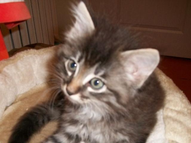 Отдам в дар: котятa фото2